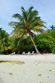 White sand with coconut palms of Indian ocean Maldives — Stockfoto