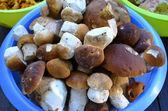 Edible mushrooms in bowl — Zdjęcie stockowe