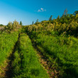 Rural grass way tracks at day time — Stock Photo #12023394