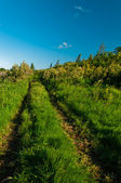 Rural grass way tracks at day time — Stock Photo