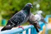 Pigeon sitting on support in park — Foto Stock