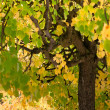 Stock Photo: Tree comwith green and yellow leaves