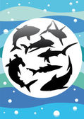 Vector silhouettes of sharks — Stock Vector