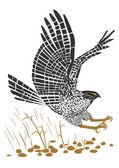 Flying Hawk — Stock Vector