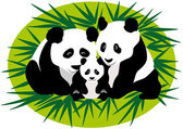 Family Panda Bears — Stock Vector