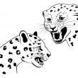Two snarling leopard — Stock Vector