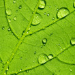 ������, ������: Water drop dew drop leaf lotuseffekt plant veins spring leaf surface macro network