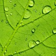 Постер, плакат: Water drop dew drop leaf lotuseffekt plant veins spring leaf surface macro network