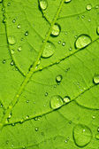 Water drop dew drop leaf lotuseffekt plant veins spring leaf surface macro network — Stock Photo