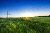 Cornfield sunset power line pylon dusk farm landscape summer wheat field — Stock Photo