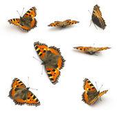 Motyle motyli zestaw kolekcja trzepotanie mucha fleckenfalter uroda wiosna pomarańczowe żarówki garde — Zdjęcie stockowe