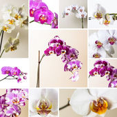 Pink orchid set collection flower flora cosmetics spa room flower decoration flower valentine gift — Stock Photo