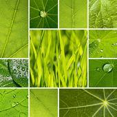 Leaf water drops set collage leaf veins vein roll off raindrops, nature, environment lotuseffekt grass — Stock Photo