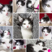 Baby cats collage set play house cat pet kitty kitty looking tongue whisker faithful — Stock Photo