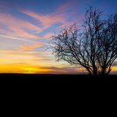 Sunrise silhouette old tree winter sunset nature orange blue hour hot sunlight — Stock Photo