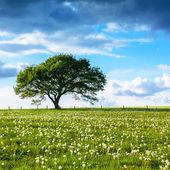 Oak tree old eifel clouds hiking national park nrw landscape foliage — Stock fotografie