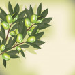 Olive branch with leaves — Stock Photo