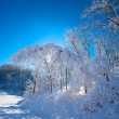 Stock Photo: Backlit Snow Covered Trees