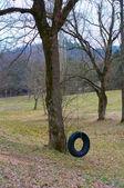 Tire Swing — Stock Photo