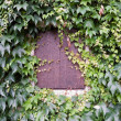 Window shutter and ivy on house wall — Stock Photo #33435017