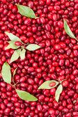 Ripe cornel berries — Stock Photo