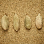 Cardamon beans — Stock Photo
