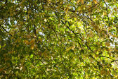 Branches background — Stockfoto