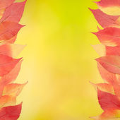 Red and yellow leaves on yellow background — Stock Photo