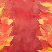 Czerwone i żółte liście na czerwonym tle — Zdjęcie stockowe