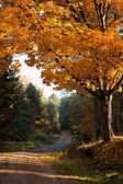 Autumnal tree in forest — Stock Photo