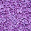 Violet lilac flower background — Foto Stock