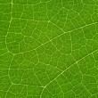 Stock Photo: Tree leaf background