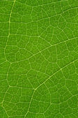 Tree leaf background — Stock Photo