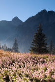 Mountain landscape with flowery meadow — Stock Photo
