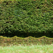Stock Photo: Hedge