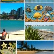 Collage tropical — Stock Photo