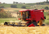 Threshing wheat — Stock Photo
