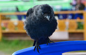 The bird in the street's cafe. — Stock Photo