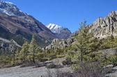 Nepal, trekking en el anapurna. ngval pueblo viejo. — Foto de Stock
