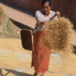 Nepalese woman shakes up the grain to dry on one of the squares Bhaktapur. — Stock Photo