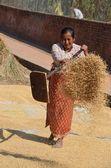 Donna nepalese scuote il grano ad asciugare su una delle piazze di bhaktapur. — Foto Stock