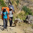 Stock Photo: Nepal, trekking in Himalayas. Porters carry loads of tourists and lead goat