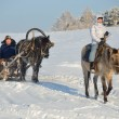 Foto de Stock  : Horse-riding tour on ridges of Ural mountains.