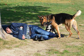 Istanbul, a man is sleeping under a tree. Next two dogs. — Stock Photo
