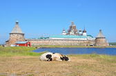 Cows in front of Solovetsky monastery. — Stock Photo