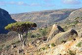 Yemen, Socotra Island, Dragon trees on the plateau of Diksam — Stock Photo