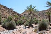 Jemen, wyspie sokotra, palmami i kostrzewa w dolinie — Zdjęcie stockowe