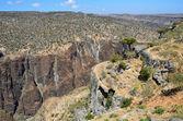 Yemen, Socotra, dragon trees on Diksam plateau — Stock Photo