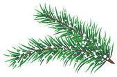 Vector illustration of fir branches with snow — Stock Vector