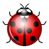 Vector Illustration of ladybird (symbol of good luck) — Stock Vector